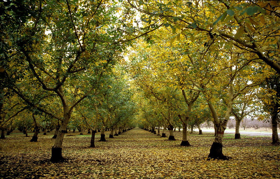Trees Photograph - Fall Orchard by Kathy Yates