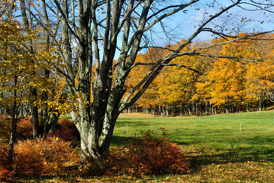 Trees Photograph - Fall Pasture by Tim Nyberg