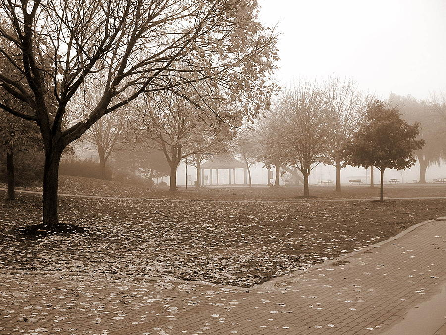 Sepia Photograph - Fall  by Paul SANDILANDS