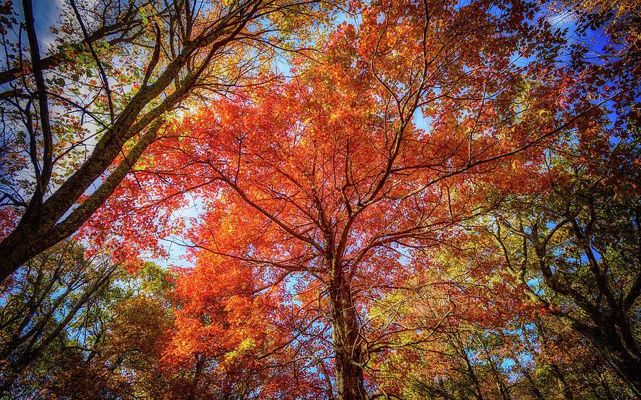 Fall Red by Joe Shrader