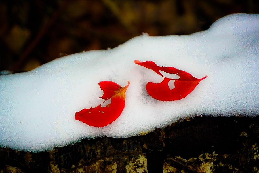 Fall Red Winter White Photograph by Desmond Raymond