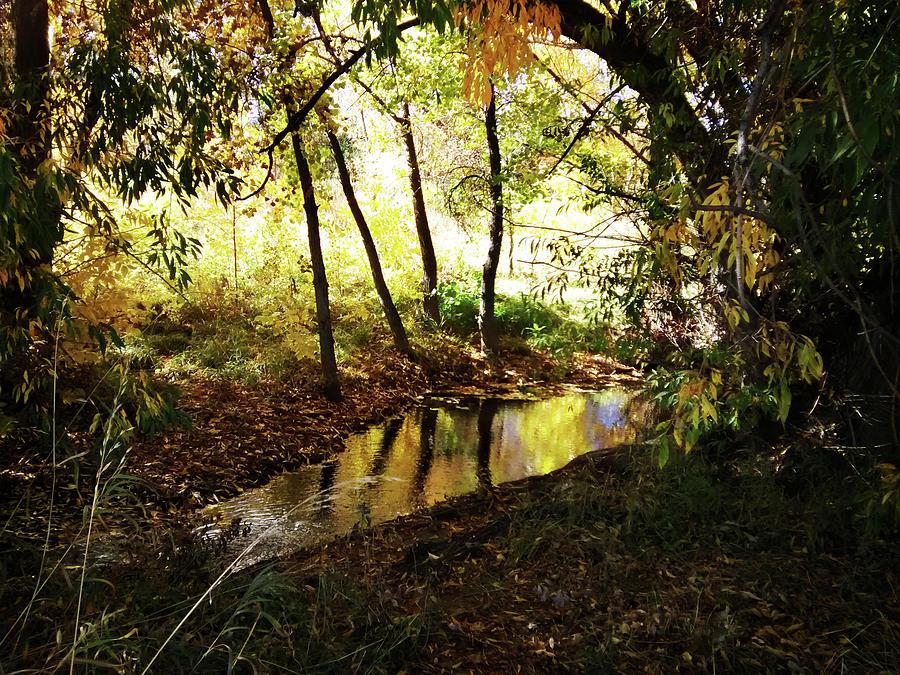 Fall Reflections Photograph