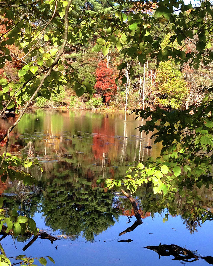 Fall Photograph - Fall Reflections by Nancy Landry