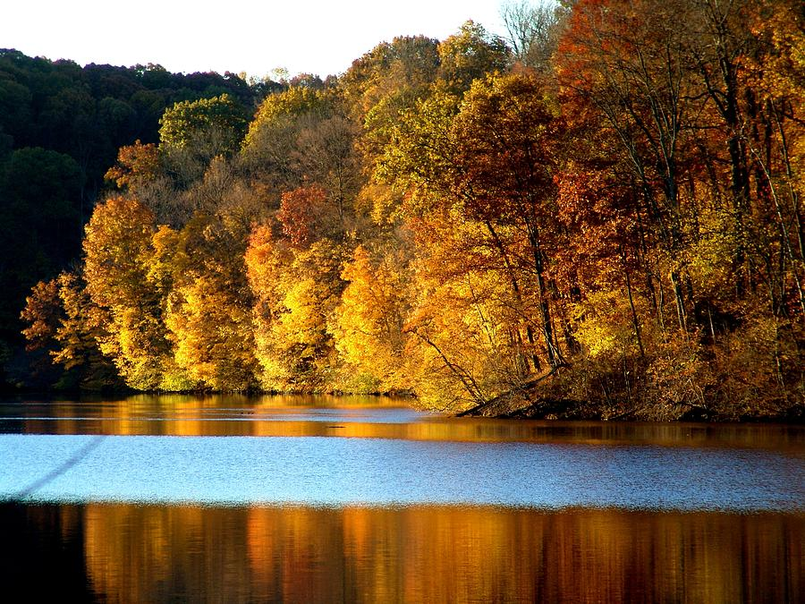 Trees Photograph - Fall Reflections Of Indiana by Carol Milisen
