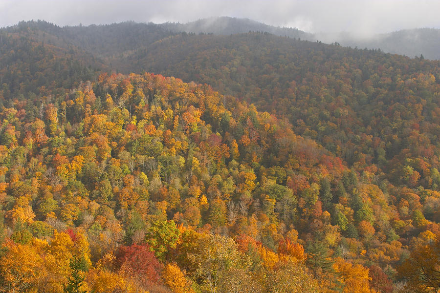 Fall Ridges Smokies  by Harold Stinnette