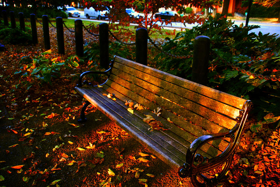 Fall Scene And The Bench In The Park Photograph By Susanne