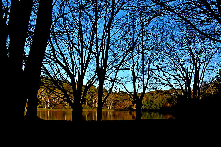 Fall Photograph - Fall Silhouette by Larry Jones