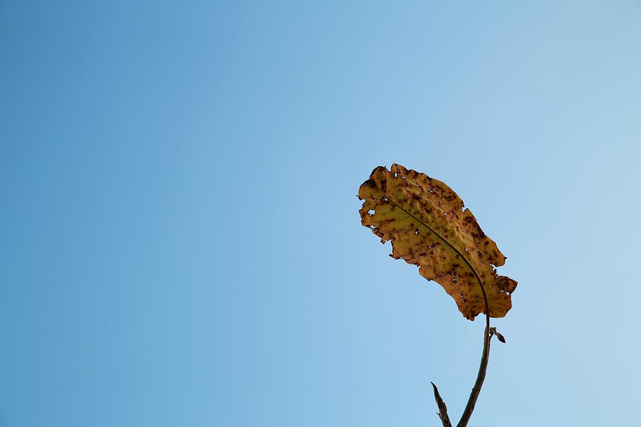 Fall Photograph - Fall Simplicity by Joanna Madloch