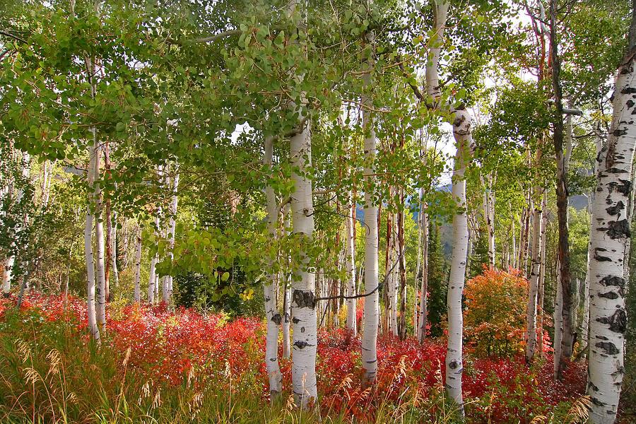 Autumn Photograph - Fall Splender 47 by Mark Smith