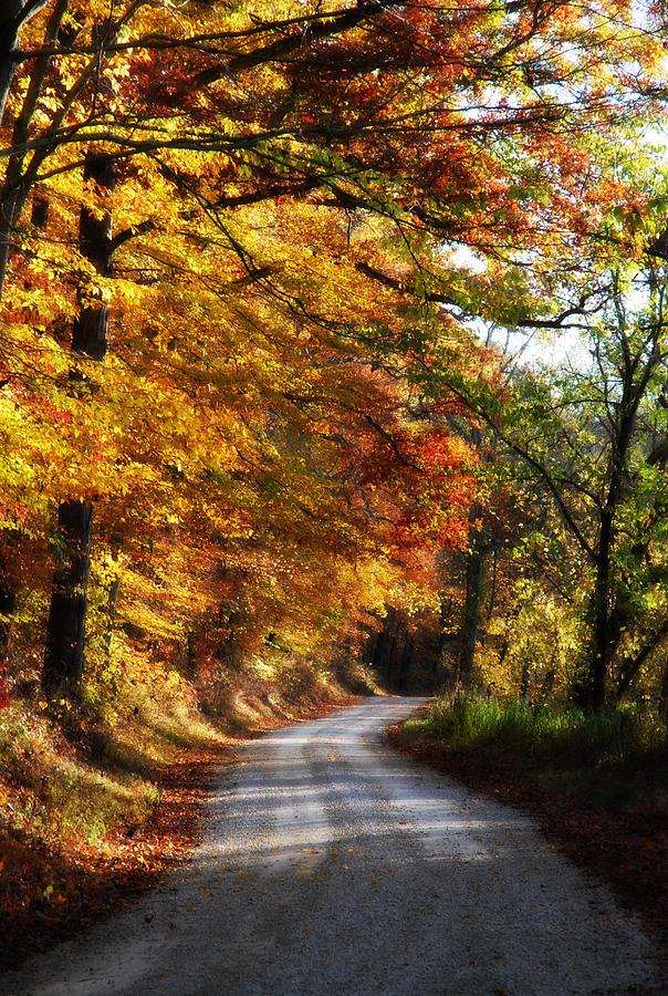 Fall Mixed Media - Fall Splendor by Cheryl Helms