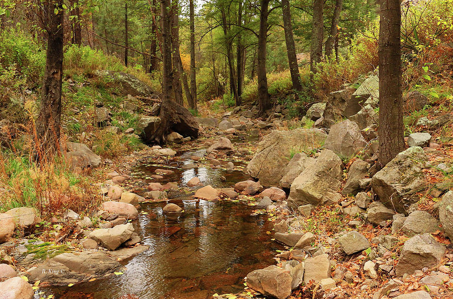 Fall Stream and Rocks by Roena King