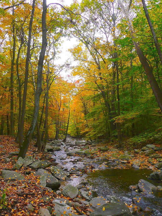 Fall Stream by Joy Buckels
