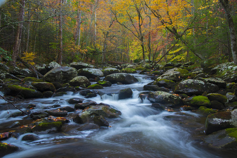 Fall Stream by Kenneth Blye