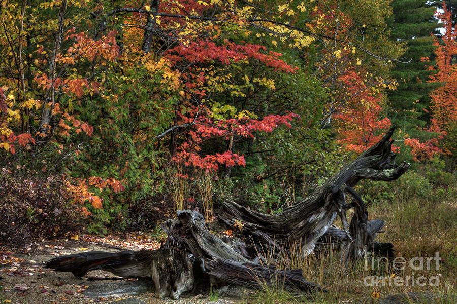 Fall Stumps by John Sandiford