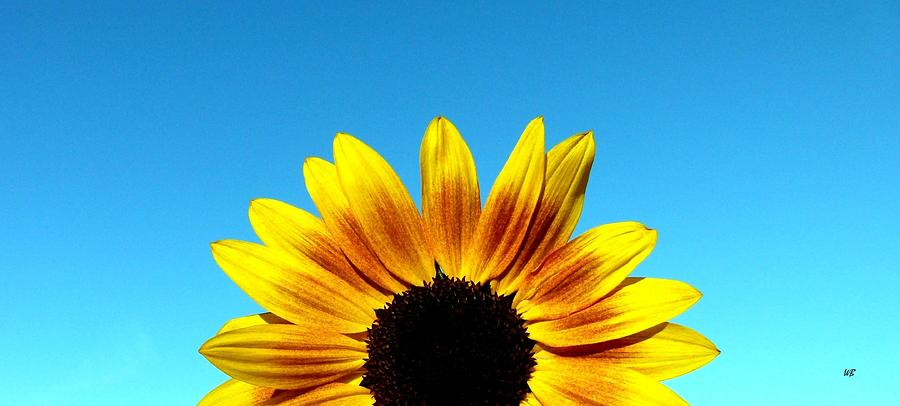Sunflower Photograph - Fall Sunrise by Will Borden