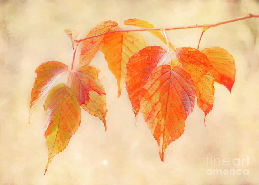 Autumn Photograph - Fall Together by Hal Halli