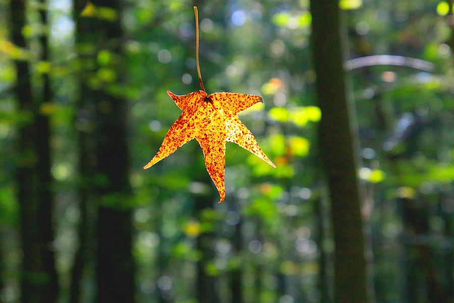 Fall Photograph by Tony Umana