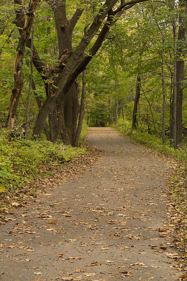 Trail Photograph - Fall Trail Scene 45 A by John Brueske