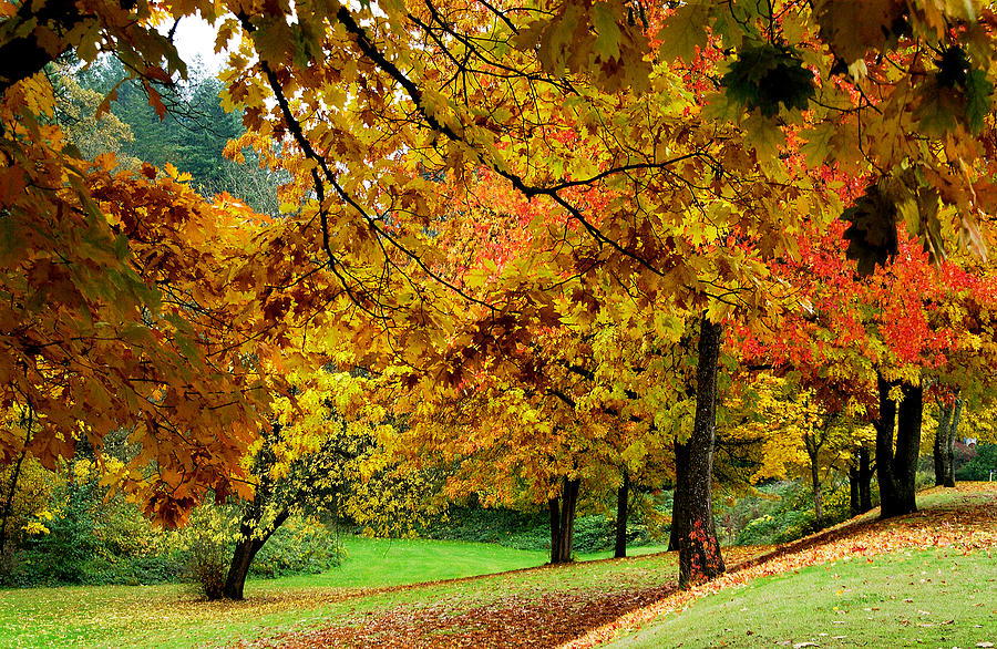 Fall Leaves Photograph - Fall by Val Jolley