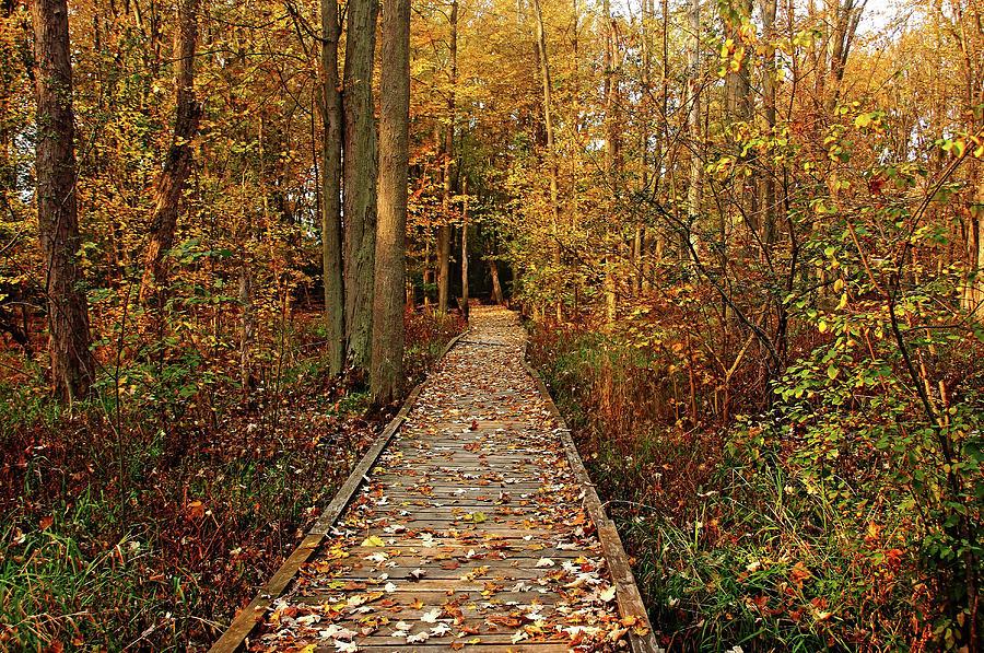 Fall Walk by Debbie Oppermann