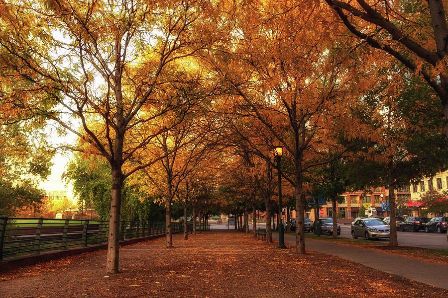 Fall Walk Photograph