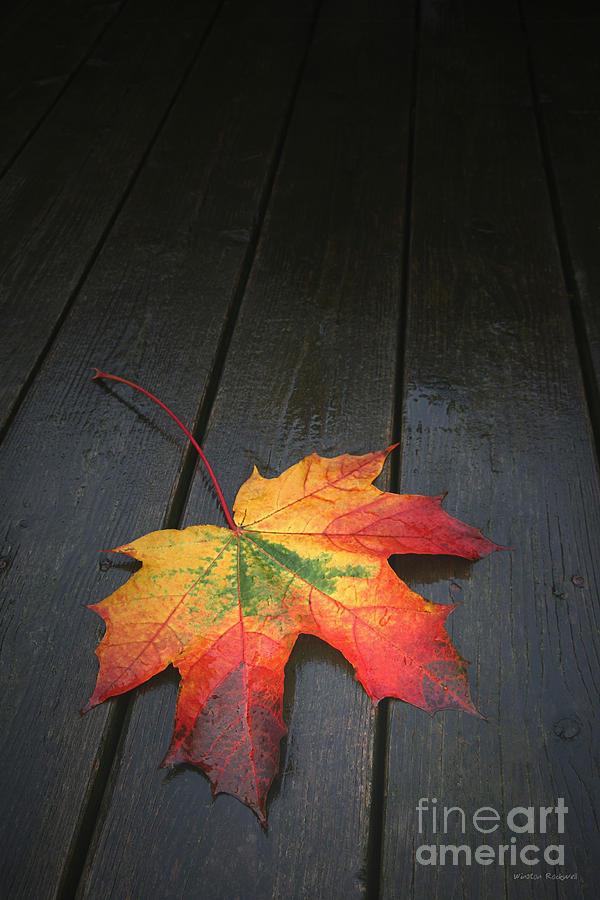 Leaf Autumn Fall Rain Color  Photograph - Fall by Winston Rockwell