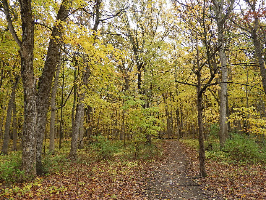Green Photograph - Fall Woods by Red Cross