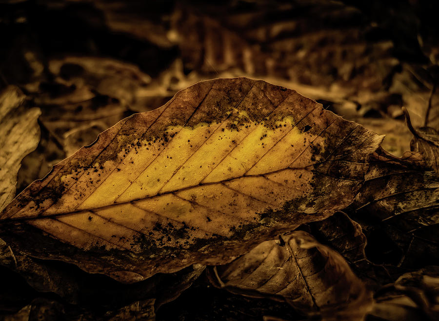 Fall Color Photograph - Fallen Color by Odd Jeppesen