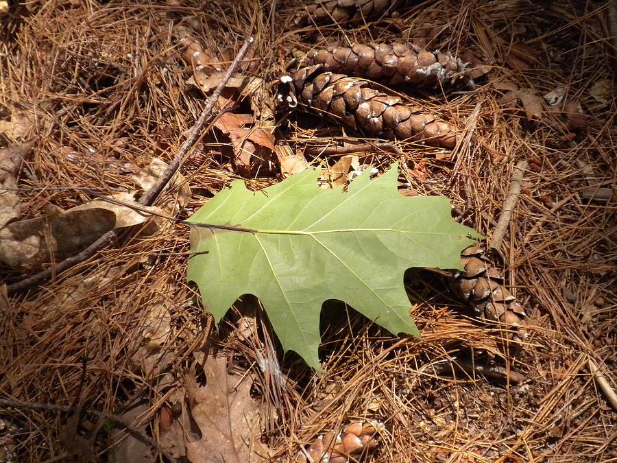 Leaf Photograph - Fallen Leaf by Karen Moulder