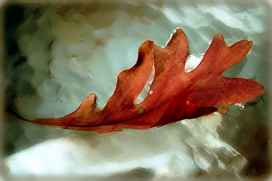 Nature Photograph - Fallen Leaf by Linda Sannuti