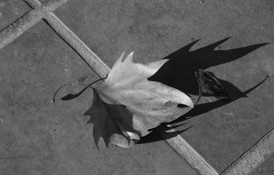Fallen Leaf Photograph - Fallen Leaf by Yavor Kanchev