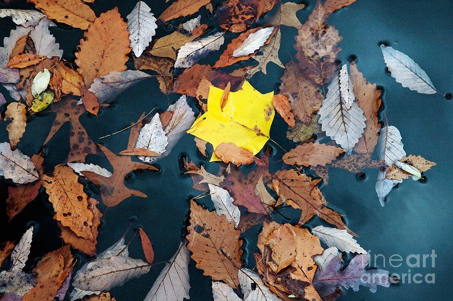 Autumn Photograph - Fallen Leaves by Hideaki Sakurai