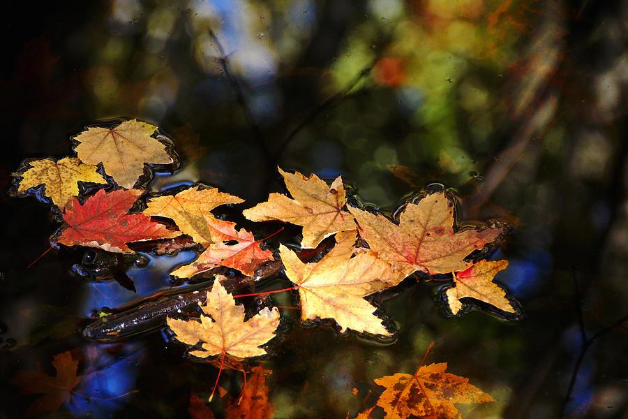 Fallen Leaves On Pond by Debbie Oppermann