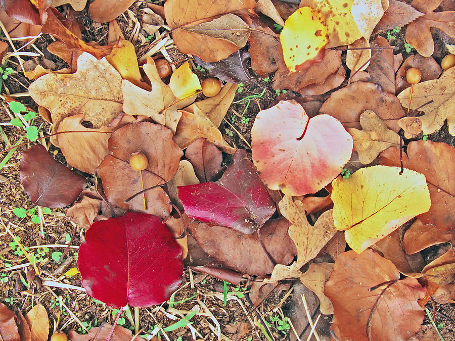Fallen Leaves Photograph