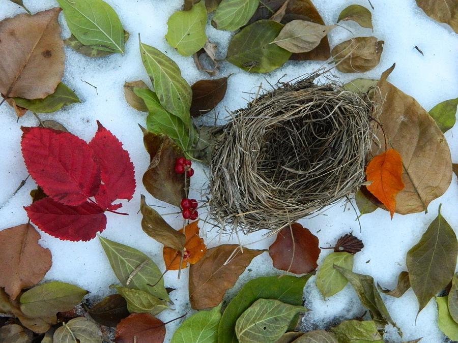 Fallen Nest by Kathy Barney