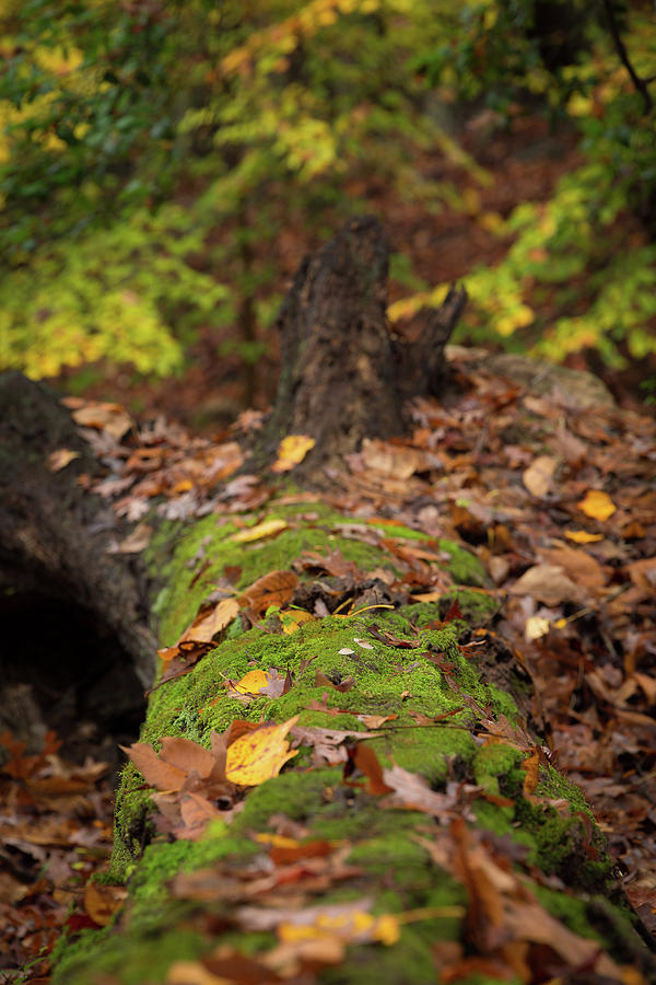Fall Leaves Photograph - Fallen Oak by Jim Neal
