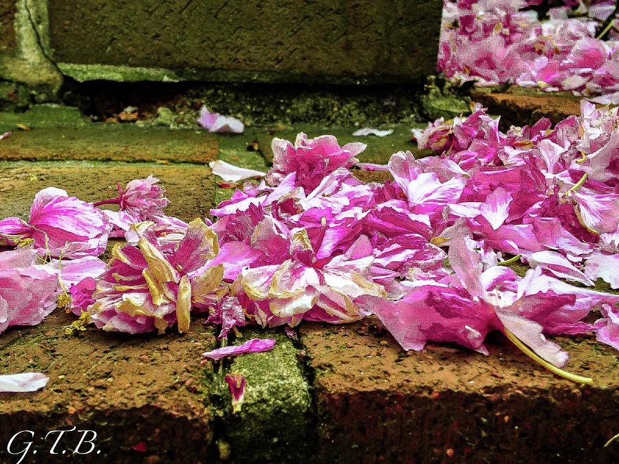 Flower Petals Photograph - Fallen Petals by Garrett Blum