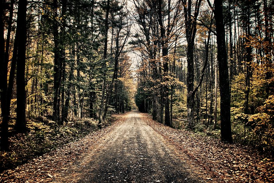 Nature Photograph - Fallen Road by Nathan Larson