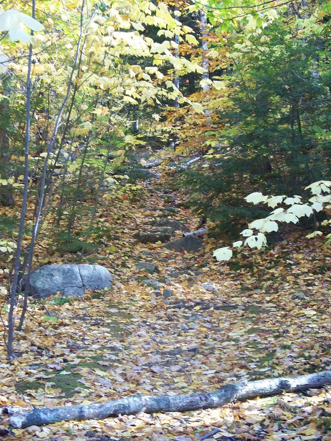 Landscapes Photograph - fallen tree II by Rosanne Bartlett