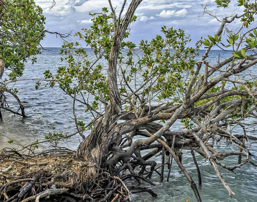 Fallen Tree by Linda Constant