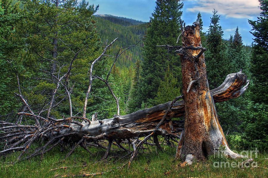 Landscape Photograph - Fallen Tree by Pete Hellmann