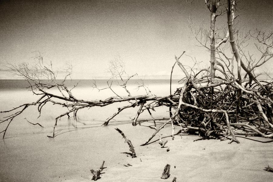 Fallen Trees by Amarildo Correa