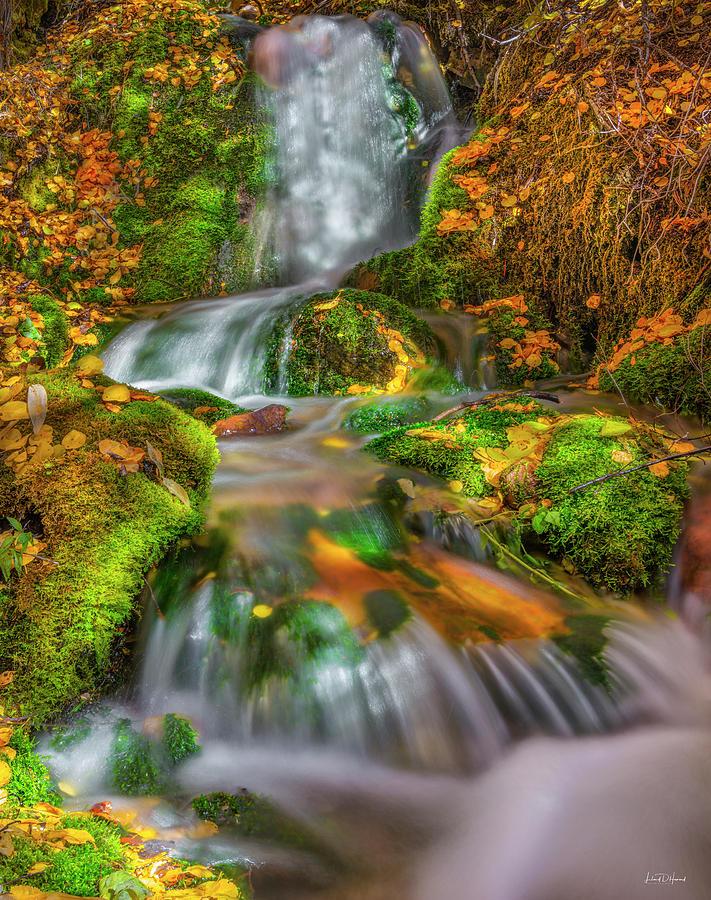 Appealing Photograph - Fallert Creek Autumn by Leland D Howard