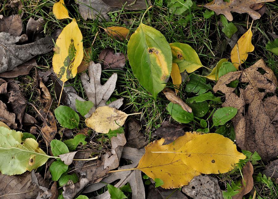 Fall Photograph - Falling by JAMART Photography