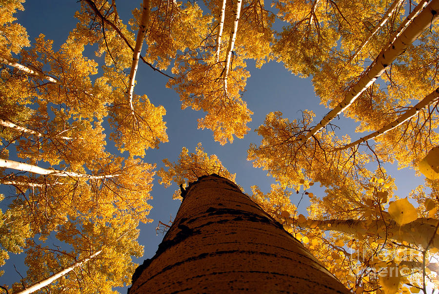 Fall Photograph - Falling Sky by David Lee Thompson