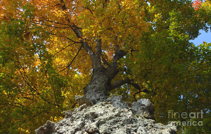 Fall Photograph - Falling Tree by David Lee Thompson