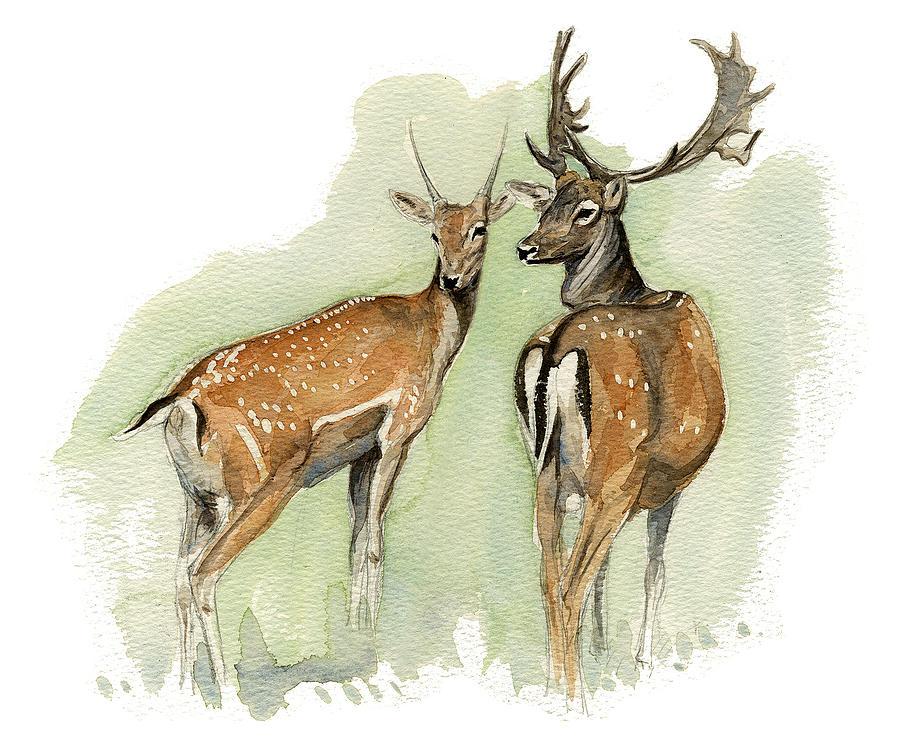 Fallow Painting - Fallow Deer by Chris Pendleton