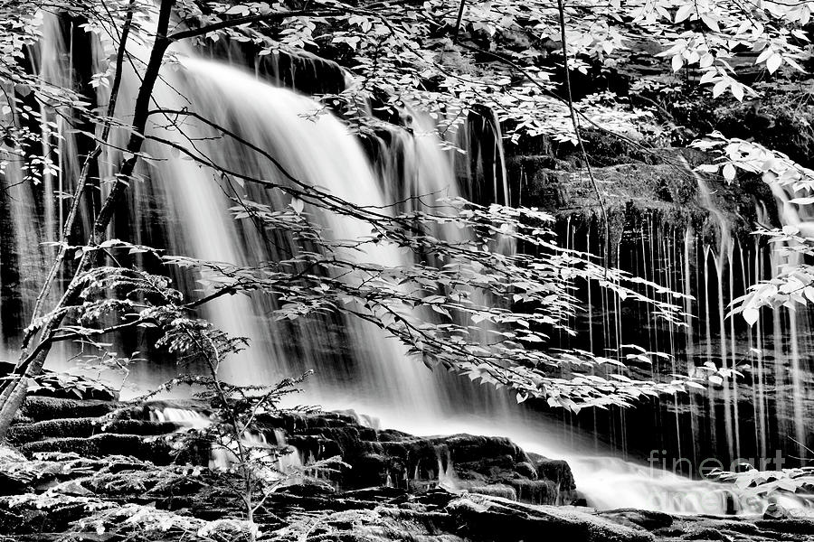 Ricketts Glen Photograph - Falls And Trees by Paul W Faust - Impressions of Light