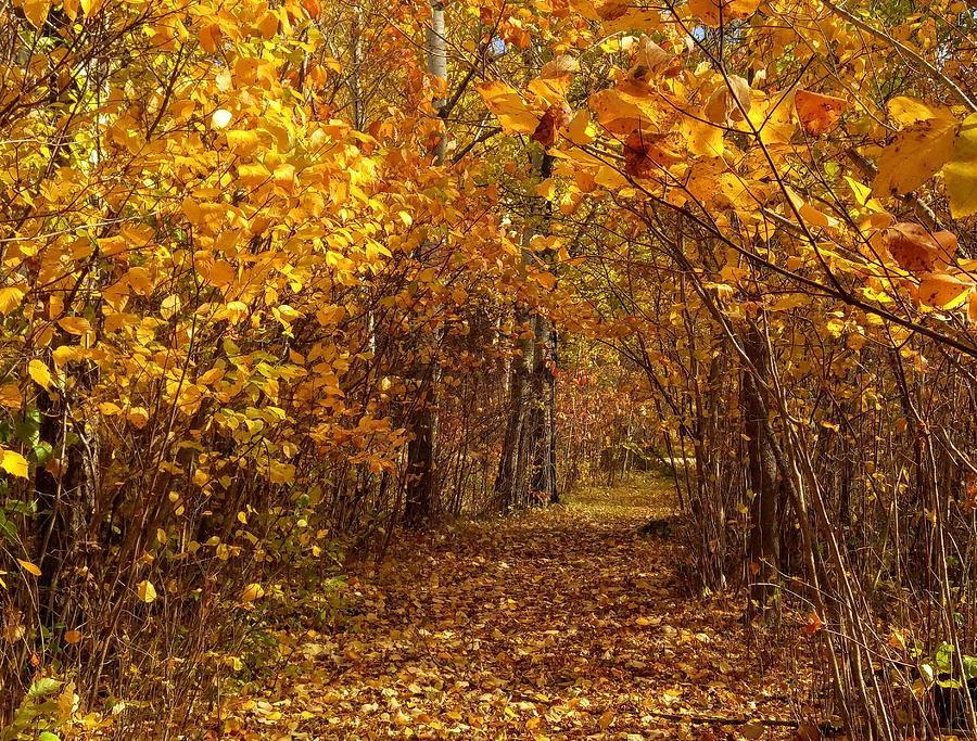 Fall's Secret Place by Sharilee Swaity