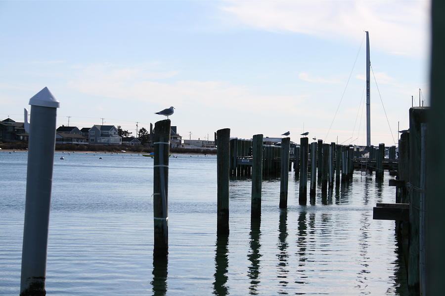 Landscape Photograph - Falmouth Harbor by Caitlin Reynolds